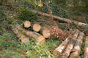 cut down pine trees