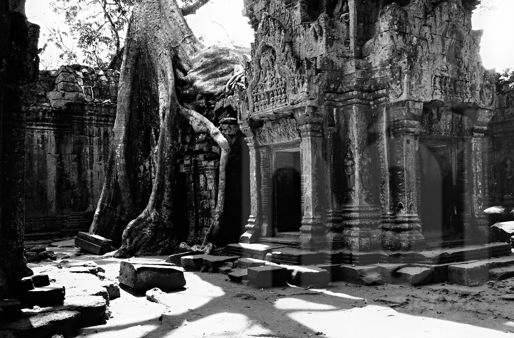 Scene of old temple in Ta Prohm, Angkor, Siem Reap, Cambodia, Southeast Asia
