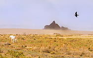 White Horse, Raven, Navajo Nation, New Mexico