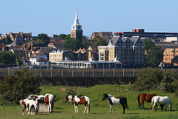 © Licensed to London News Pictures. 08/06/2014. Gravesend enjoyed stunning sunshine and clear blue skies this morning. Horses graze in Tilbury, Essex, with Gravesend in the background on a beautiful, sunny Sunday. <br /> Credit : Rob Powell/LNP
