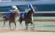 November 3, 2018: Breeders' Cup Horse Racing World Championships. Chalon and jockey Javier Castellano battle down the stretch in the Breeders' Cup Filly and Mare Sprint.