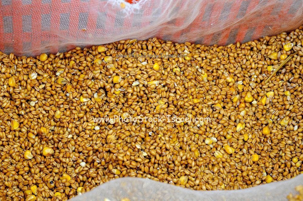 Chicken Feed - corn and other seeds used to feed free range chickens