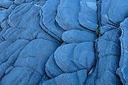 Pattern on precambiran shield rock<br /> Killbear Provincial Park<br /> Ontario<br /> Canada