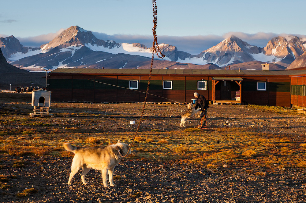 Polish meteorologist Tomasz Wawrzyniak mingles with the huskies on guard (against polar bears) at the Polish Polar Station in Hornsund, Svalbard.