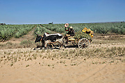 Madagascar, primitive farming