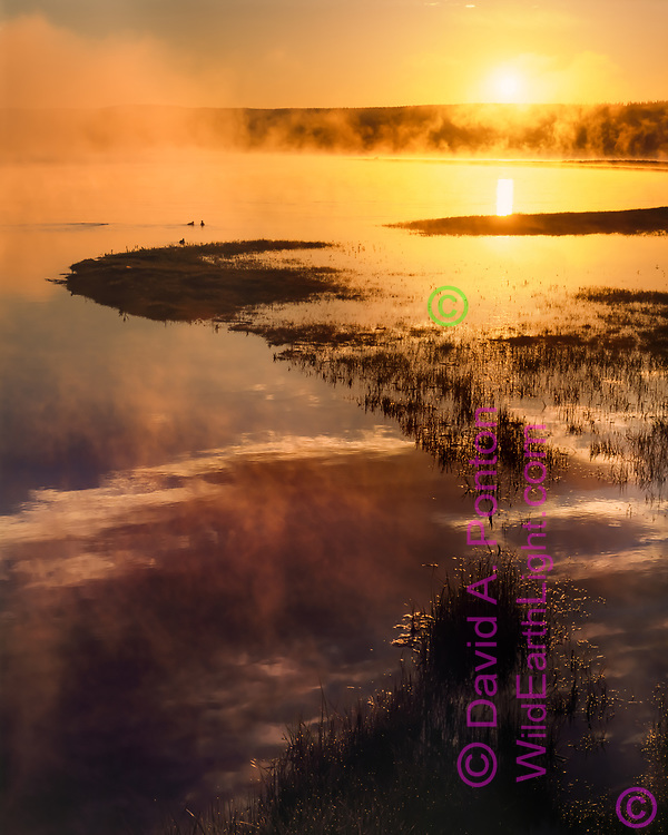 Sunrise in fog along the shoreline of the Yellowstone River, Yellowstone National Park, WY, © David A. Ponton