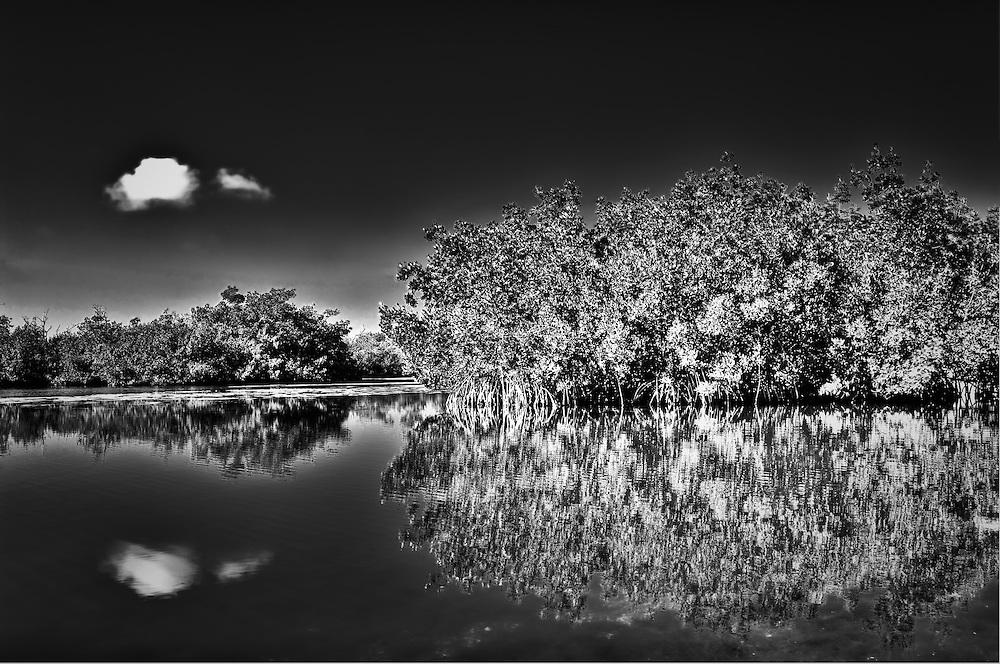 Red Mangroves on an idyllic day on Sanibel Island.