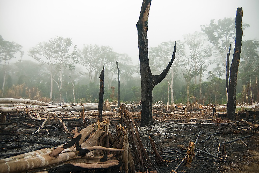 Slash and burn agriculture for new banana plantations in the Manu Cultural Zone, Peru.