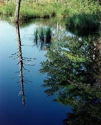 Reflection on bog, Westmoreland, New Hampshire.