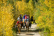 Family on Horses sightseeing the Fall Aspens in Colorado Rocky Mountains