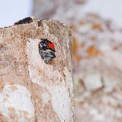 """""""Ninho de Pica-pau-anão-barrado (Ave) fotografado em Linhares, Espírito Santo -  Sudeste do Brasil. Bioma Mata Atlântica. Registro feito em 2013.<br /> <br /> <br /> <br /> ENGLISH: White-barred Piculet's Nest photographed in Linhares, Espírito Santo - Southeast of Brazil. Atlantic Forest Biome. Picture made in 2013."""""""