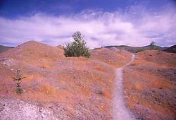 Trail Through Hummocks, Mt. St. Helens National Volcanic Monument, Washington, US