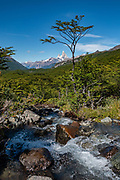 Follow a forested trail along Arroyo Huemul to Huemul Lake from Estancia Lago Del Desierto, in Santa Cruz Province, Argentina, Patagonia, South America. In the distance rises the north face of Mount Fitz Roy (3405 m or 11,171 ft elevation). A short, steep, attractive hike leads to Huemul Lake and Glacier (4 km round trip with 215 m gain) on private land. Pay the trail entrance fee at the campground at Estancia Lago Del Desierto. Directions: drive north from El Chalten for 35 km on gravel road RP23, leaving the national park, to reach Punta Sur of Lago del Desierto.