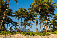 Coconut trees lining Kailua Bay, Oahu, Hawaii