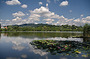 Il lago di Sartirana con nifee in primo piano..Sartirana lake with waterlilies in foreground.