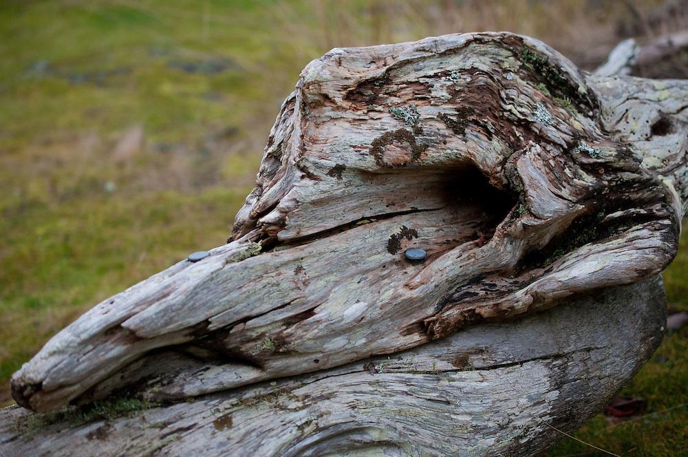 Driftwood at Horton's Hook, Shaw Island, Washington, US
