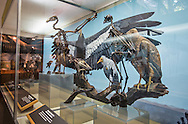 Bird Skeleton's on display at the La Brea Tar Pits Museum