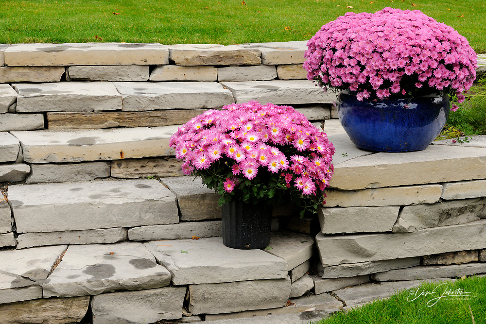 Garden wall with potted mums, Greater Sudbury, Ontario, Canada