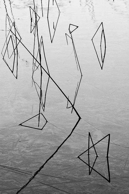 Shoreline reeds, Schoolcraft Lake, Northwest Minnesota, USA