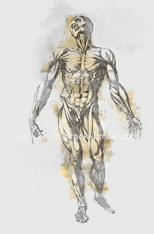 """Digitally enhanced image of a Male full body front woodcut print at the opening of the Human Anatomy book """"Notomie di Titiano"""" Printed in Italy in 1670"""