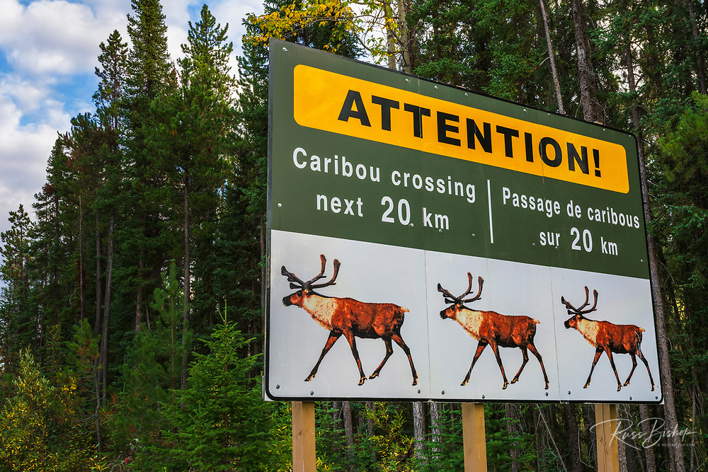 Caribou crossing sign, Jasper National Park, Alberta Canada