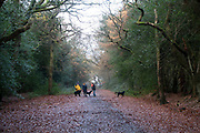 Autumn scene of fall leaves and dog walkers in Sutton Park in Sutton Coldfield, Birmingham, United Kingdom. (photo by Mike Kemp/In PIctures via Getty Images)
