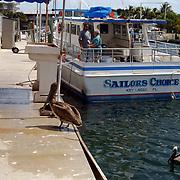Vakantie Miami Amerika, pelikaan vogel in de haven van Key Largo Florida