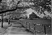 Infrared cherry blossom trees and the Thomas Jefferson Memorial, Tidal Basin, Washington, DC