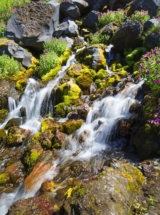 Cold, clear water generated by rain and snow flows from this groundwater spring on Mount St. Helens along the Loowit Trail. (Mike Siegel / The Seattle Times)