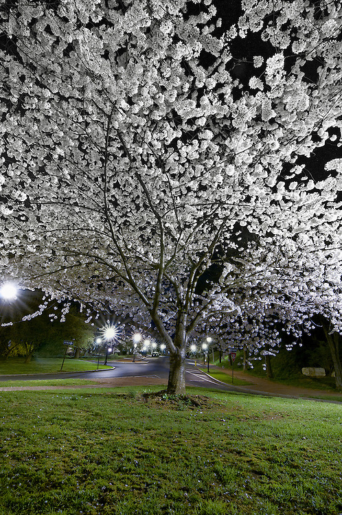 There is nothing like a crisp spring night in Bethlehem.