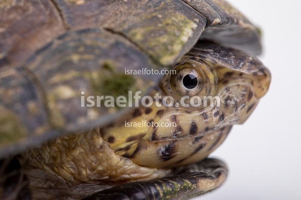 Tortuga  / Turtle