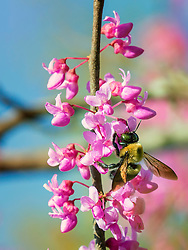 Pollen From Pretty Pink Petals