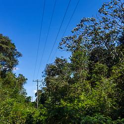 """""""Floresta antropizada (Floresta) fotografado em Santa Maria de Jetibá, Espírito Santo -  Sudeste do Brasil. Bioma Mata Atlântica. Registro feito em 2016.<br /> <br /> <br /> <br /> ENGLISH: Anthropized Forest photographed  in Santa Maria de Jetibá, Espírito Santo - Southeast of Brazil. Atlantic Forest Biome. Picture made in 2016."""""""