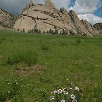 Wildflowers grow in a meadow below rock formations in Gorkhi  Terelj National Park, Mongolia.