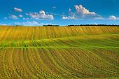 FARMER'S FIELDS