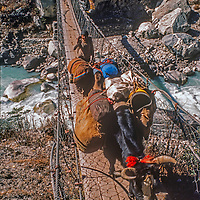 Yaks and their Sherpa driver cross a suspension bridge in the Mount Everest region of Nepal.