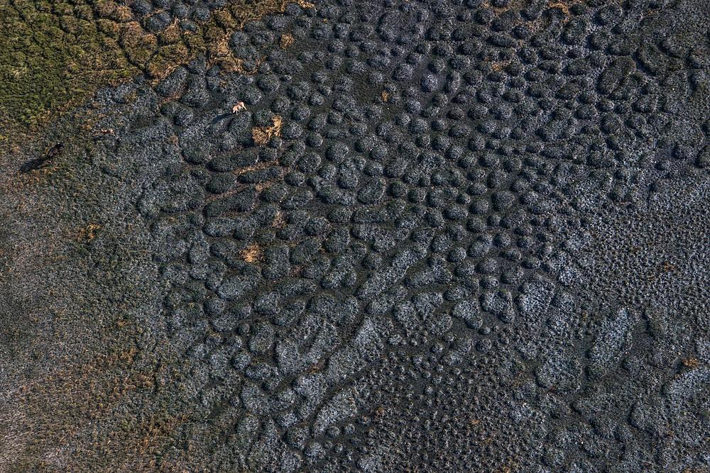 Grassland texture<br /> Savanna <br /> Rurununi<br /> GUYANA<br /> South America