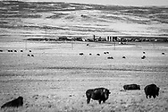 Powder River Basin.  Open plains where buffalo once freely roamed are now major producers of gas, oil, and coal.