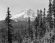 9012-11  Mt. Hood from Larch mountain. summer view. Oregon. 1930s