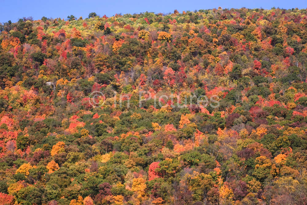 Autumnal deciduous trees change colour on a hillside in West Virginia. This annual spectacle of nature is an awe inspiring sight. This colouful landscape covers hundreds of miles of land.