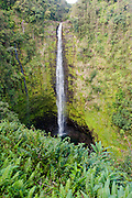 A vertical image of Akaka Falls on the Big Island of Hawaii.