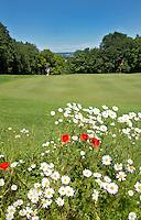 08090 FAGNON - Klaprozen op de Golfbaan Abbaye des Septfontaines, in de Franse Ardennen. COPYRIGHT KOEN SUYK