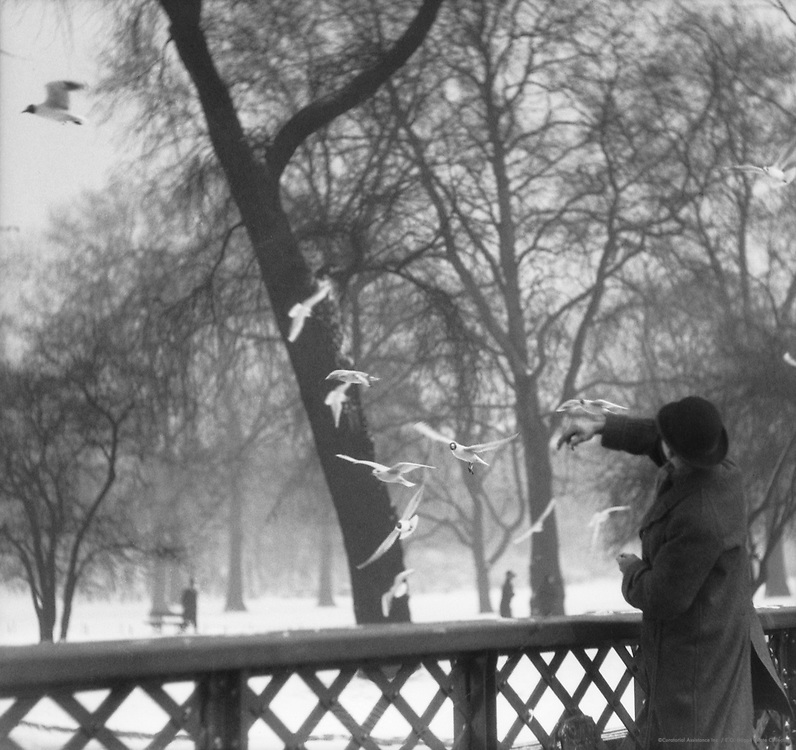 Feeding Birds in Winter, St. James's Park, London, 1929
