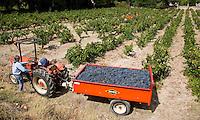 FRANKRIJK - Le Plan du Castellet - druivenoogst .  ANP COPYRIGHT KOEN SUYK
