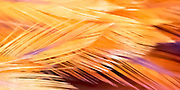 Abstract photographic art design of feathers