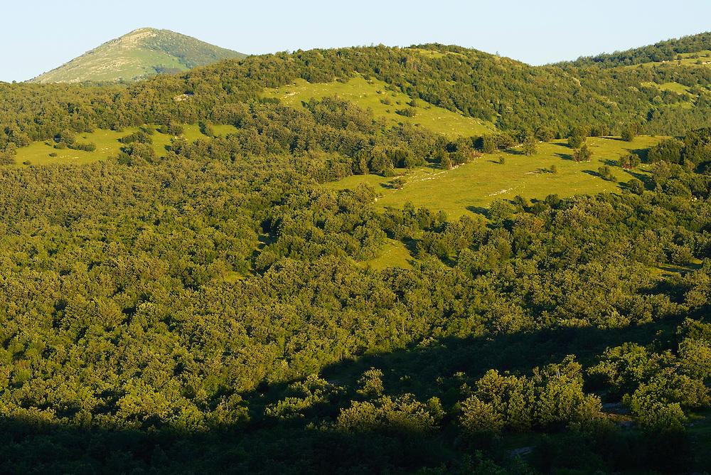 Abandoned grazing lands, Zlatni Rog/Puskar area, Velebit Nature Park, Rewilding Europe rewilding area, Velebit  mountains, Croatia