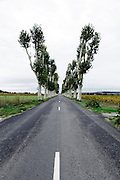 rural countryside road with trees France Languedoc Aude
