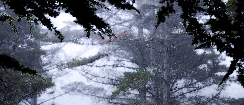 Heavy fog fills the cypress forest canopy along the coast of Big Sur