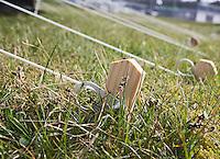 VLIELAND - (STOCK)  haring , tentharing ,  camping Stortemelk.  COPYRIGHT KOEN SUYK