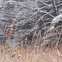 https://Duncan.co/snowy-branches-and-reeds